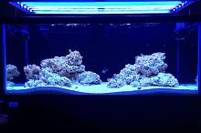 75 Gallon Mixed Reef Tank Thumbnail