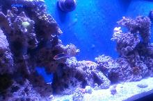 125 Mixed Reef Thumbnail