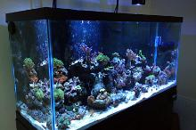 My 90 Gallon Thumbnail