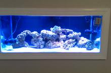 75G Mixed Reef Thumbnail