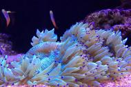 Purple Elegance Coral
