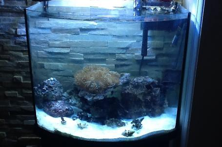 Reef 30 gallons en construction Thumbnail