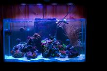 57 Gallon Reef Thumbnail