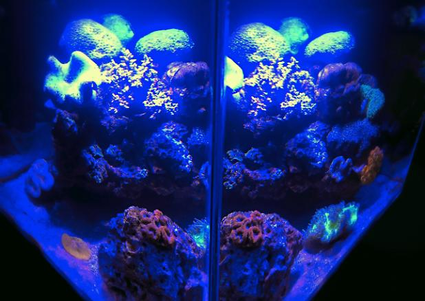 FTS July 17, 2014(added new corals)