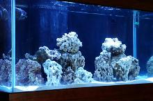 Noah's Mixed Reef Thumbnail