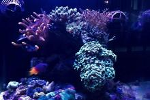 Mixed reef 18 gallon Thumbnail