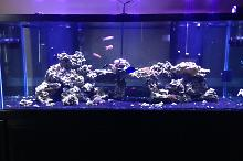 Mike's Large Reef Thumbnail