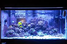 90G Mixed Reef Thumbnail