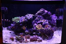 Office Reef Thumbnail