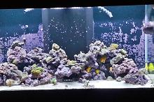 Deepsea Aquatics 100 Gallon Thumbnail