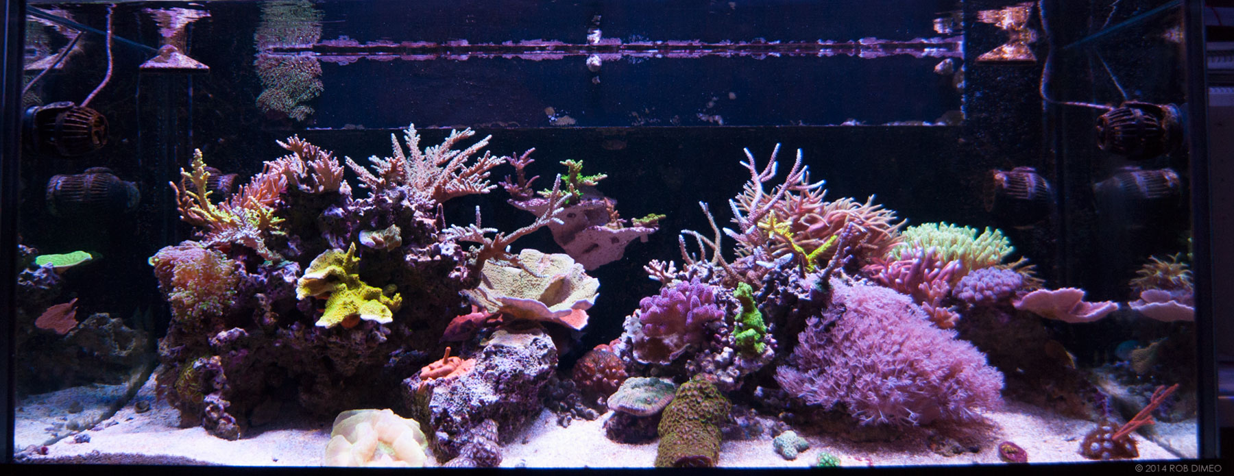 Rimless 75g mixed reef Thumbnail